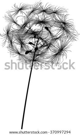 illustration with single dandelion silhouette isolated on white background