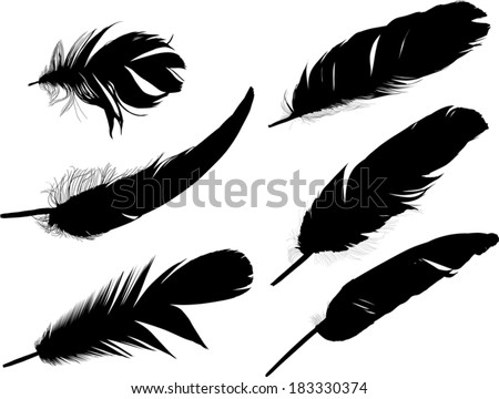 illustration with six black feathers on white background