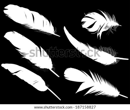 illustration with six white feathers on black background