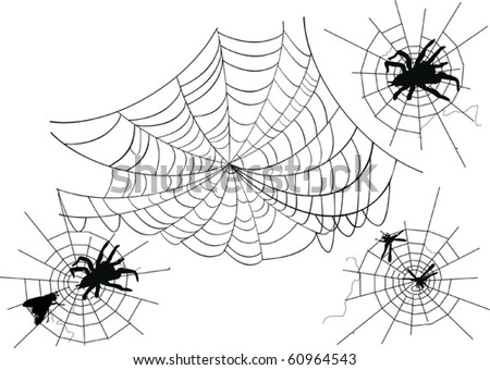 illustration with spider webs isolated on white background