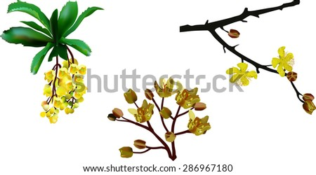 illustration with spring yellow flowers isolated on white background