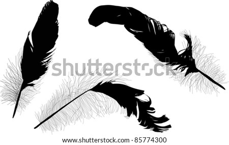 illustration with three black feathers isolated on white background - stock vector