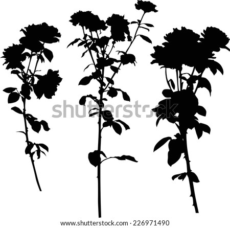 illustration with three black rose flowers isolated on white background - stock vector