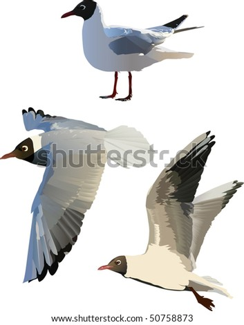 illustration with three gulls isolated on white background - stock vector
