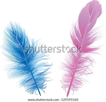 illustration with two blue and pink feathers isolated on white background