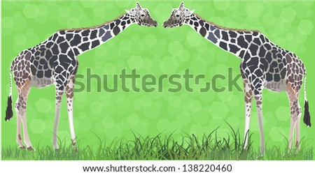 illustration with two giraffes in green grass - stock vector