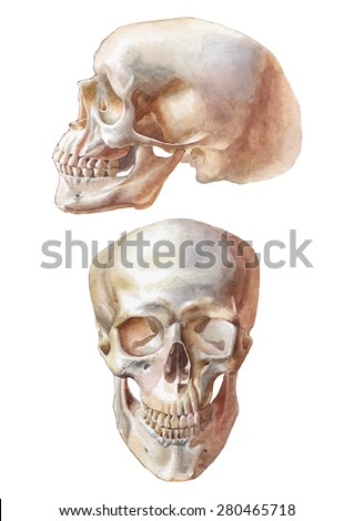 Illustration with two skulls. Watercolor. Vector. Hand drawn. - stock vector