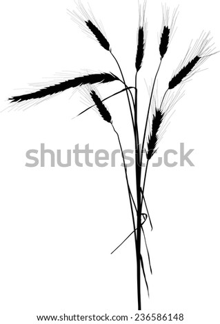 illustration with wheat silhouettes isolated on white background - stock vector