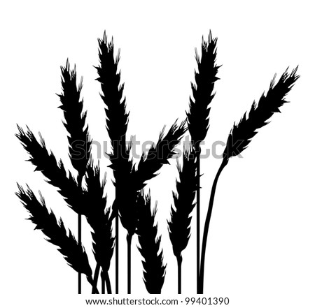 Corn Stalk Isolated Stock Photos, Images, & Pictures ...