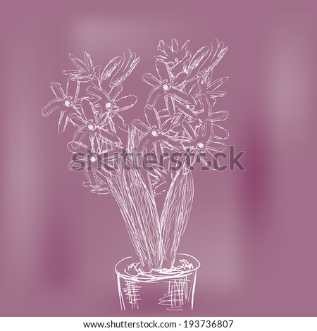 illustration with white sketch of hyacinth in pot
