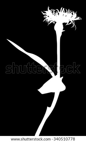 illustration with wild flower silhouette isolated on black background