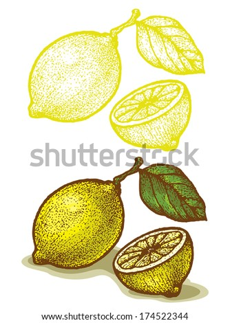 Illustrations of lemon in retro style - stock vector