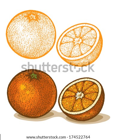 Illustrations of orange in retro style - stock vector