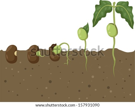 Illustrator of Beans Cycle - stock vector