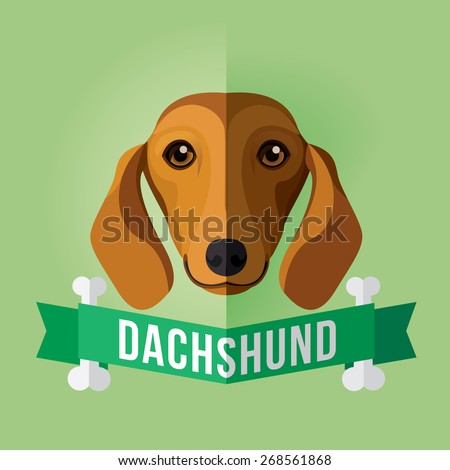 Image of a dog's face. Dachshund. Vector illustration - stock vector