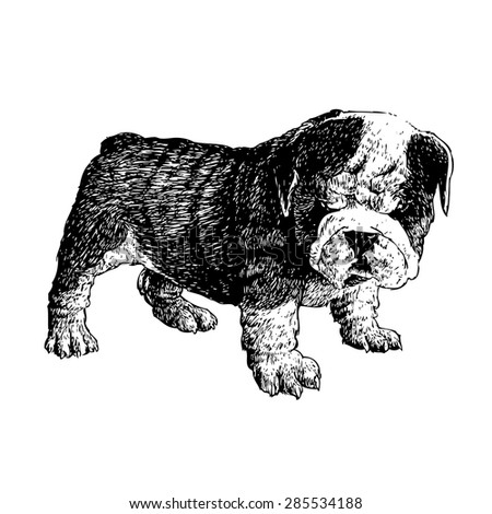 Image of bulldog hand drawn vector