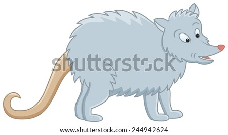 image of funny grey opossum on isolated background - stock vector