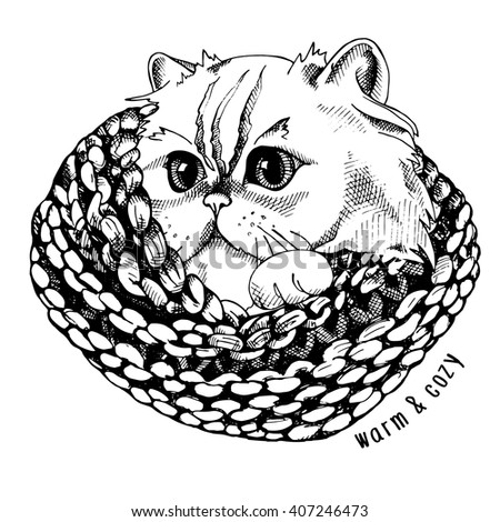 Image portrait of a Himalayan cat in knitted scarf. Vector illustration.