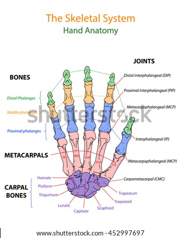 overview of anatomy 5 Biology 105: anatomy & physiology has been evaluated and recommended for 3 semester hours and may overview of anatomy and cell biology.