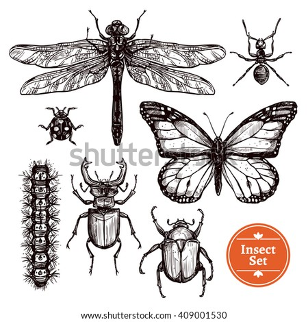 Images set of different insects from ant to butterfly in hand drawn sketch style isolated vector illustration - stock vector