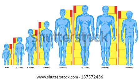 increasing male body shapes proportions man stock vector 137572436, Muscles