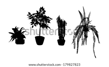 Image Result For Indoor House Plants