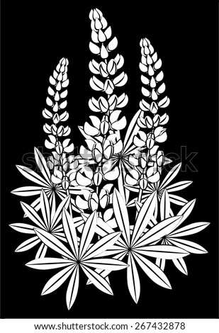 Inflorescence of lupines, silhouette on a black background - stock vector