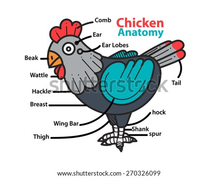 Infographic Anatomy Chicken Stock Vector 270326099 - Shutterstock