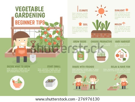 infographic for kids about how to grow vegetable beginner tips - stock vector