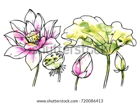 Ink Pencil Watercolor Flower SketchTransparent Background Hand Drawn Nature Painting