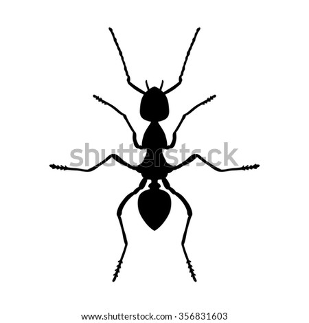 Insect Anatomy Silhouette Formica Exsecta Sketch Stock Vector ...