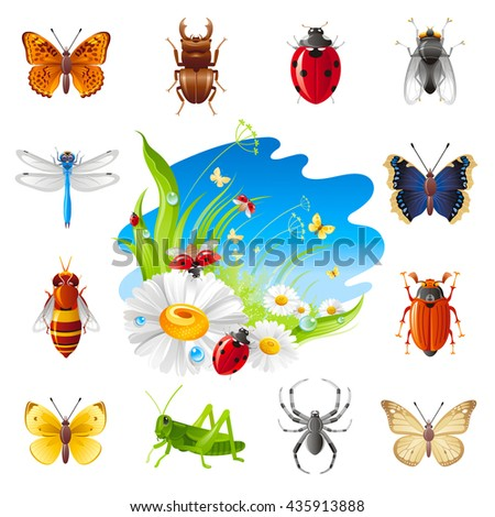 Insect and summer nature icon set with illustration for design. Chamomile flowers, ladybugs, grass and blue sunny sky.Animal icons: butterfly, beetle, ladybug, dragonfly, bee, grasshopper, spider, fly - stock vector