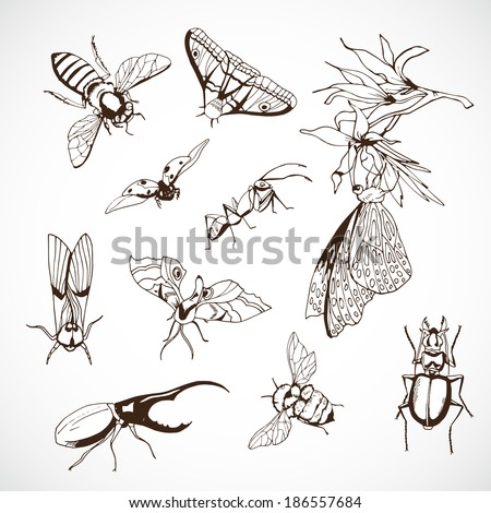 Shield Bug Drawing Insect Set Hand Drawn Vintage