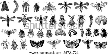 insect vector collection b - stock vector