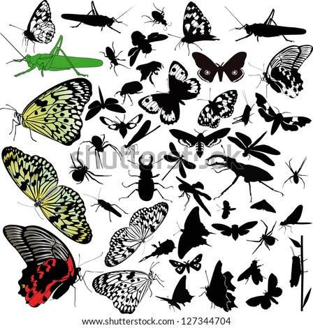 insects animals butterfly