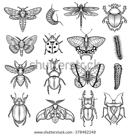 Insects black white line icons set with dragonfly and caterpillar flat isolated vector illustration  - stock vector