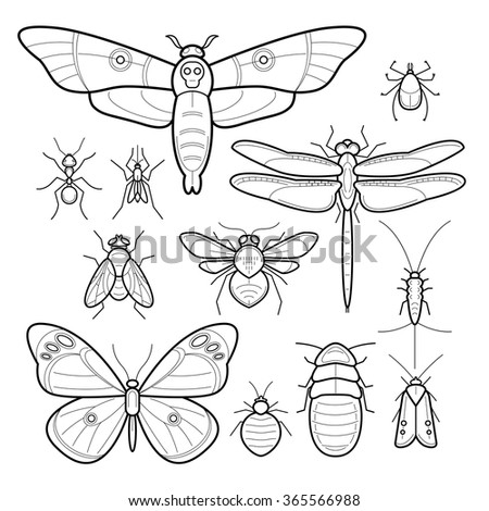 Insects butterfly, moth, dragonfly, bee, fly, moths, cockroaches, bedbugs, mites, ants, mosquitoes, silverfish. Set of vector images. Collection in modern style mono line. Black and white. - stock vector