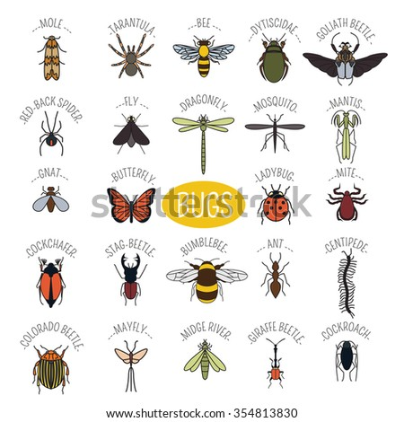 Insects icon flat style. 24 pieces in set. Colour version. Vector illustration