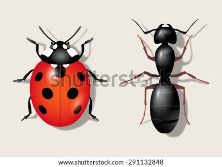 Insects: ladybug and ant. Vector illustration - stock vector