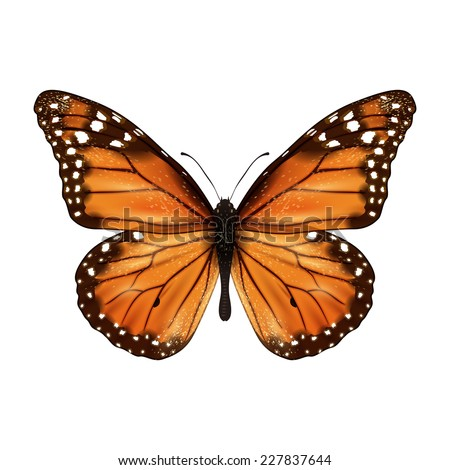 Insects realistic colored butterfly isolated on white background vector illustration - stock vector