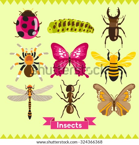Insects Vector Design Illustration - stock vector