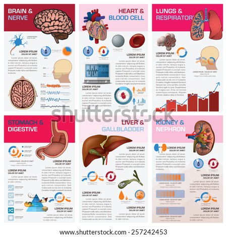 Medical Infographic Stock Photos, Royalty-Free Images & Vectors ...