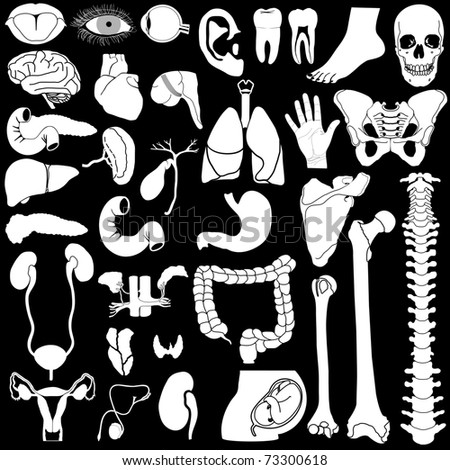 Internal organs in white and black colors, vector illustration, eps10 - stock vector