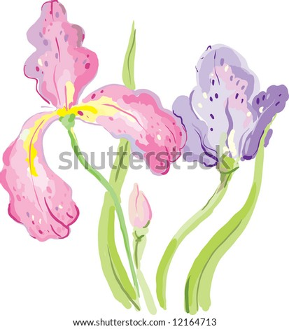 Iris flowers - stock vector