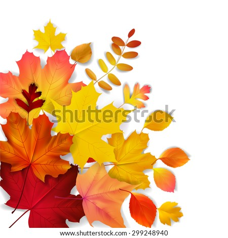 Isolated autumn leaves, vector illustration - stock vector