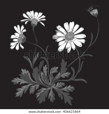 Isolated blooming meadow flower form print natural outline floral white spring ornament monochrome petal organic leaf holiday botanic summer graphic blossom drawing black daisies chamomile stem  - stock vector