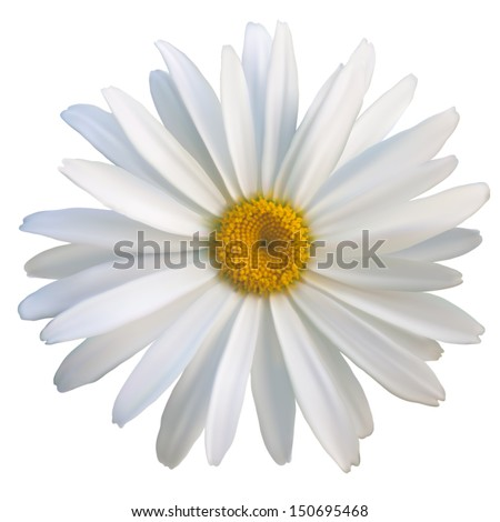 isolated daisy flower close-up, vector EPS10 mesh - stock vector