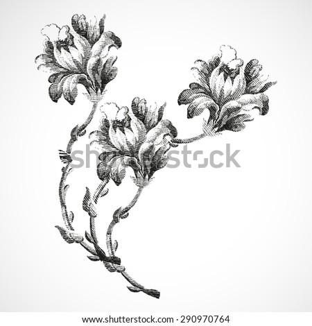 Isolated decoration print floral white petal flower leaf vector botanical summer graphic blossom element drawing black touch corner elegant creative illustration three detailed stem artwork retro  - stock vector
