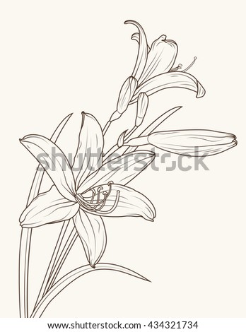 Isolated elegant lily flowers with stem and leaves. Vector sketch outline drawing. Brown on beige background.