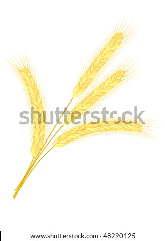 Isolated golden wheat ear after the harvest - stock vector
